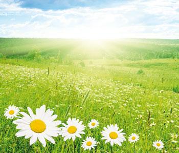 summer-field